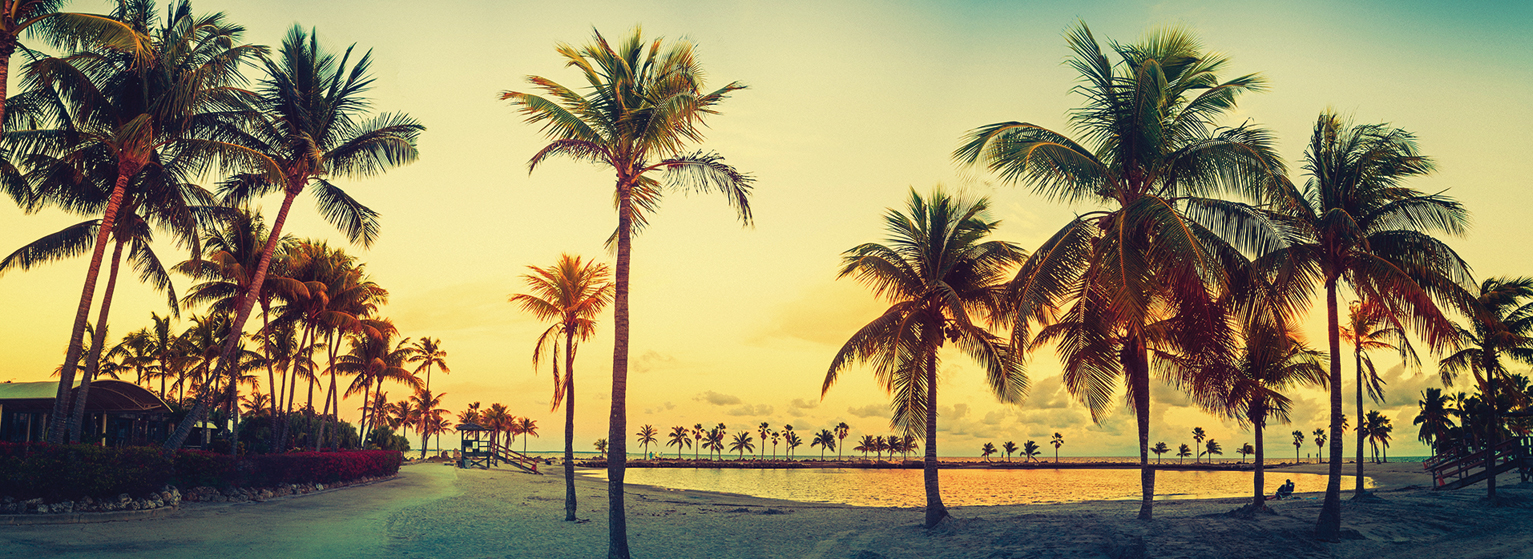 Flights from Amsterdam to Miami  from 231 EUR